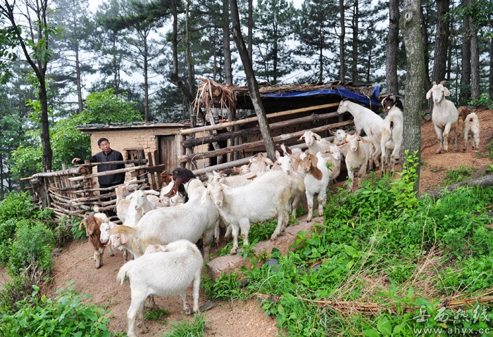 农村山羊羊圈设计图