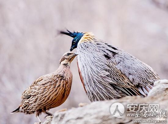 岳西发现200多种陆生野生动物