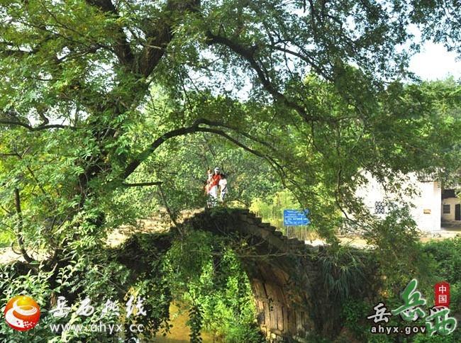 绿树掩映中的卷蓬桥下为半圆,上压石钱,单孔全石板构造,拱桥上钉有八