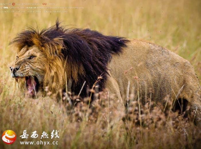 非洲的疯狂动物城