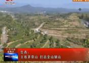 安庆岳西:主攻茅草山 打造金山银山