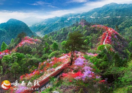 天峡第二届杜鹃花文化节于3月30日开幕