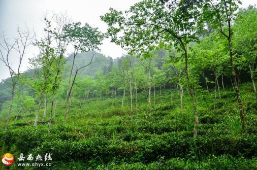 护林员王业方:大山深处的绿色守护者