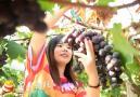 岳西王畈村种葡萄甜了贫困户