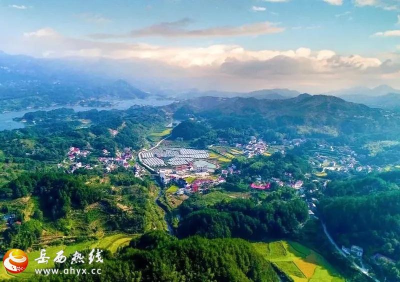 岳西王畈悠然葡萄公园开园啦